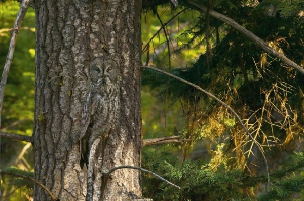 найдите на фотографиях зверушек и птичек
