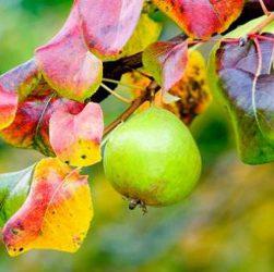 октябрь в саду