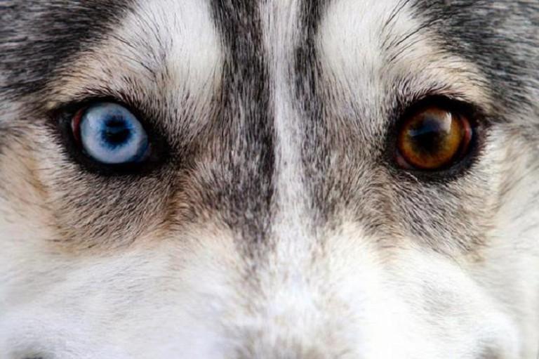Северные ездовые собаки – лучшие друзья человека