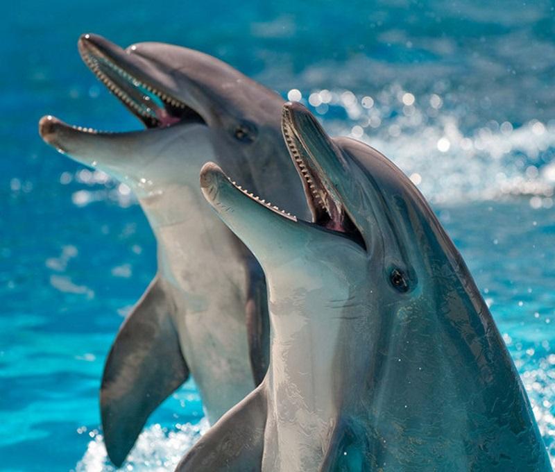 фотосессия для дельфина