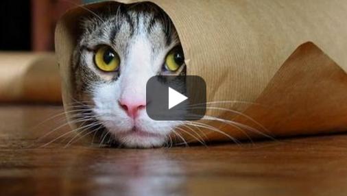 10 любопытных фактов о котах