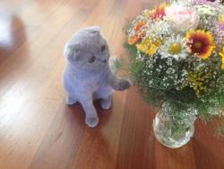 котики в возбуждении: на что способна кошачья мята