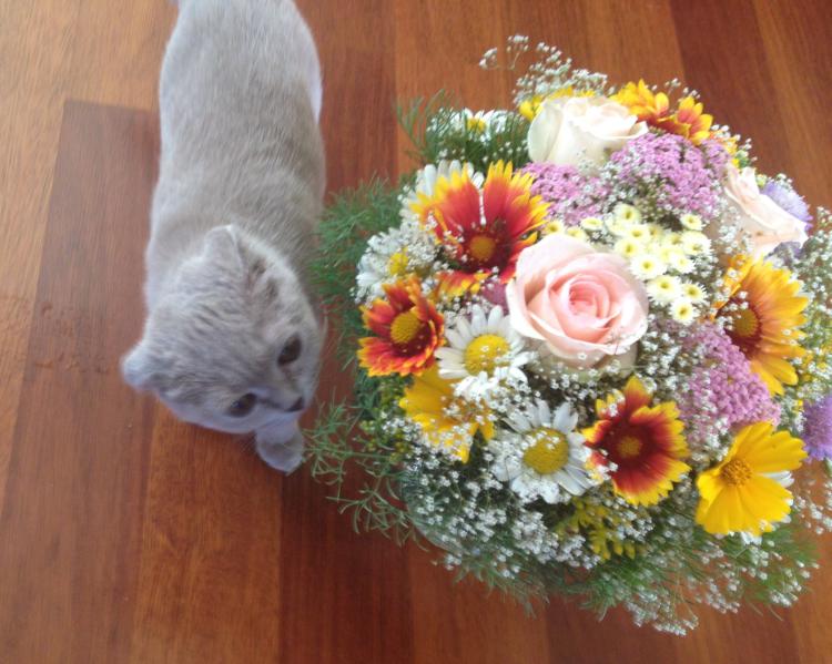 Котики в возбуждении: начтоспособна кошачья мята