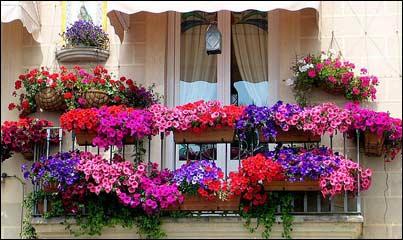 Цветы на балконе – цветущее великолепие в цветочном ящике