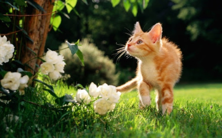 5 эффективных советов, чтобы отогнать кошек из сада