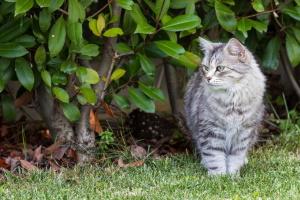 отогнать кошек из сада