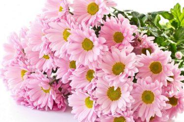 цветы для букетов