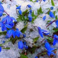 цветок узнает что пришла весна