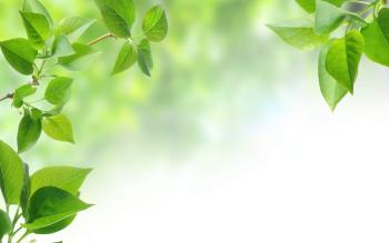 Почему листья зеленые